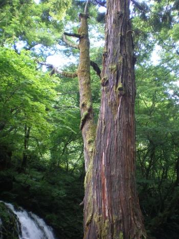 神秘的な木